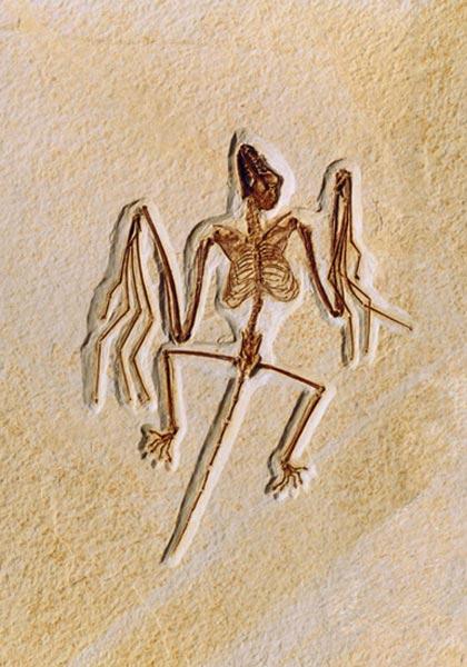 El fósil del murcielago hallado en EE UU