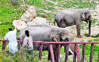 La boda de la elefanta fea