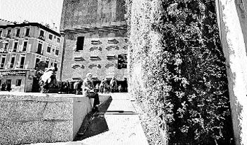 Calvas en el jardín vertical