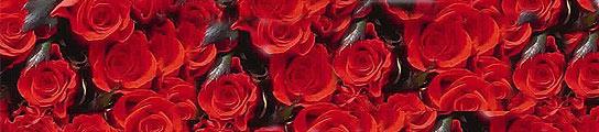 Condenan A Un Esposo A Comprar 124000 Rosas Rojas A Su Mujer Por Tacaño
