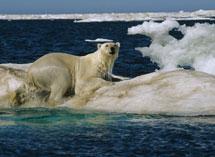 Los reyes del Ártico.