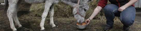 Un burro digitalizado recorrerá Asturias para elaborar un nuevo mapa cartográfico