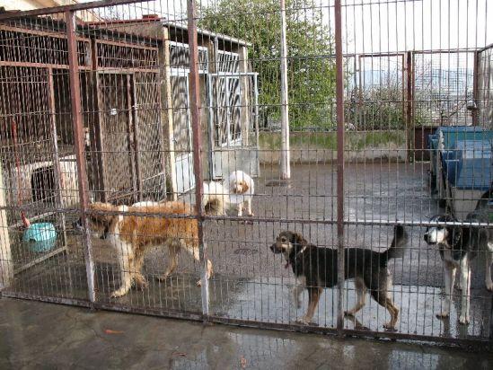 Las perreras pagan a residencias privadas para que acojan a sus animales - Perrera de vilafranca ...