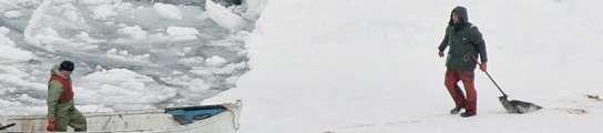 Caza de focas en Canadá