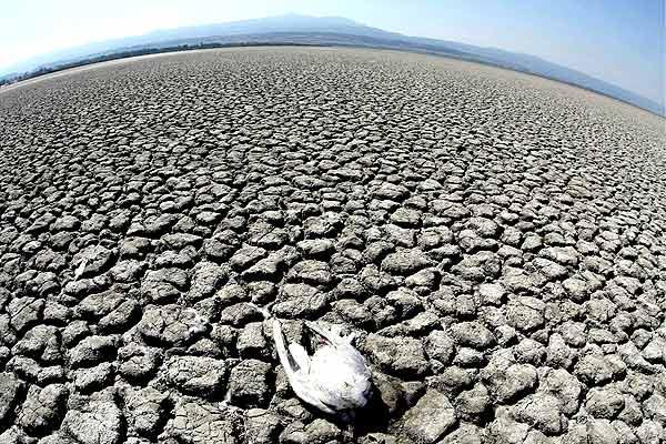 Ecologia y desastres causados por el hombre Imagenes
