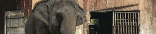 La elefanta Mali