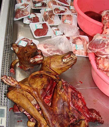 Los 10 platos más repugnantes y asquerosos del mundo [Atención, no apto para personas sensibles] 813104