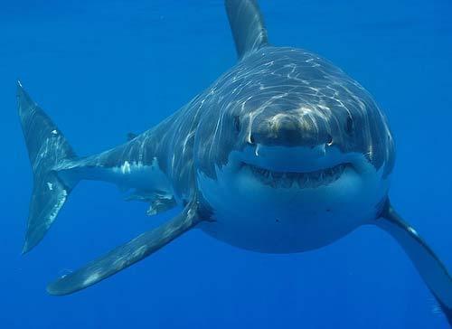 Tiburones en peligro