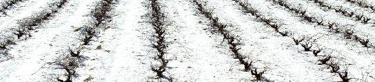 Una granizada arrasa los viñedos de El Bierzo