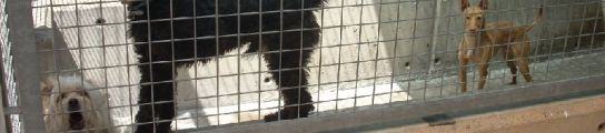 Tres perros en una jaula individual