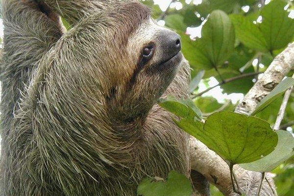 Intervenidos 21 animales ex ticos desnutridos en un for Imagenes de jardines exoticos