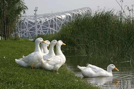 Resultado de imagen para los patos