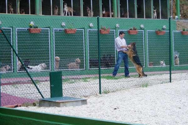 Resultado de imagen de residencias de perros