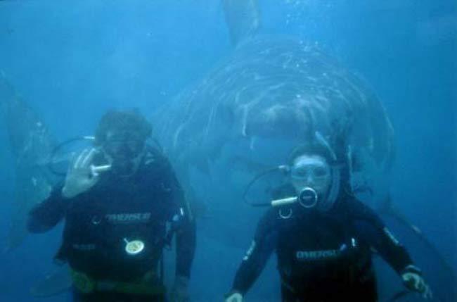 Por la espalda. Por la espalda. Se desconoce si lo que perseguía el tiburón que aparece por la espalda de estos dos buceadores era pegarse un festín a su costa, o si símplemente deseaba aparecer en la foto. Lo que si se sabe es que la instantánea es un montaje.