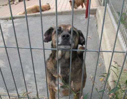 Uno de los perros abandonados