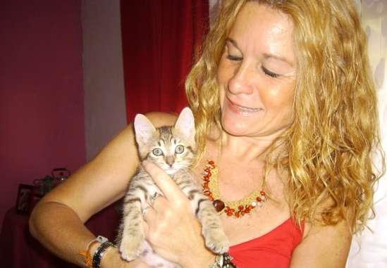 Los gatos pasan miedo en la calle y están muy desprotegidos 873840