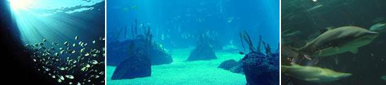 'Zonas muertas' en los océanos.