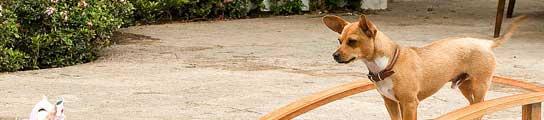 Imagen de 'Beverly Hills Chihuahua'.
