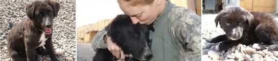 El ejército americano amenaza con matar a la mascota de una de sus soldados