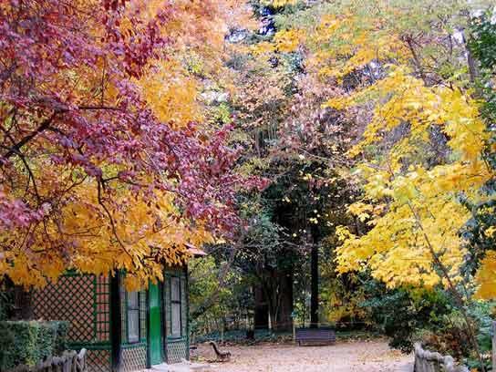 Por qué cambian de color las hojas?