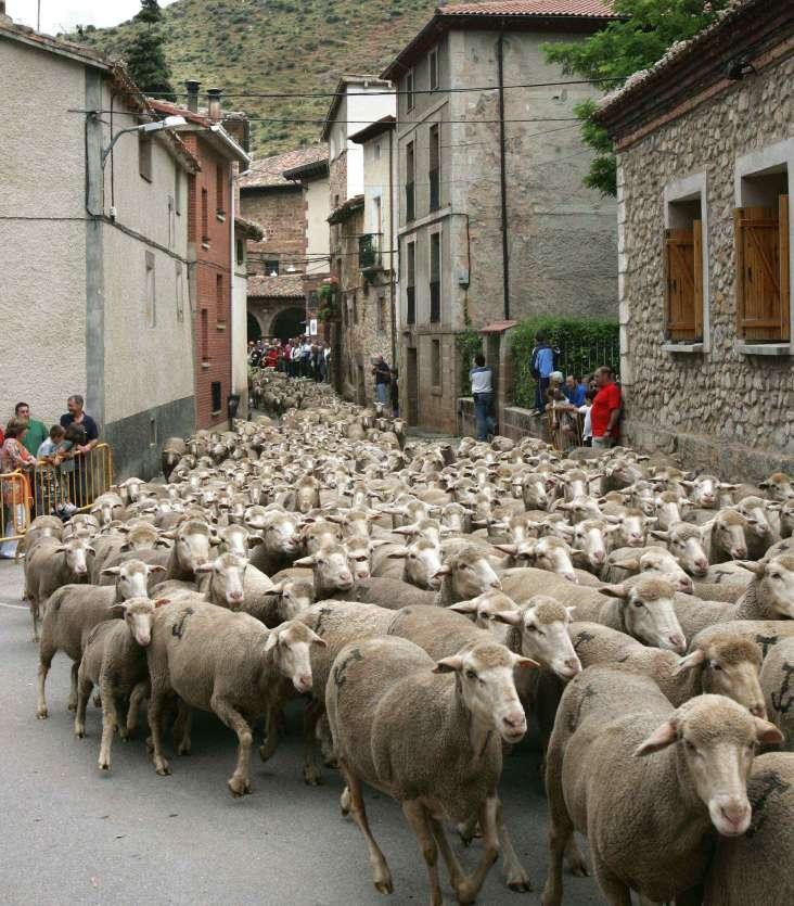 Pastor practicando zoofilia con ovejas