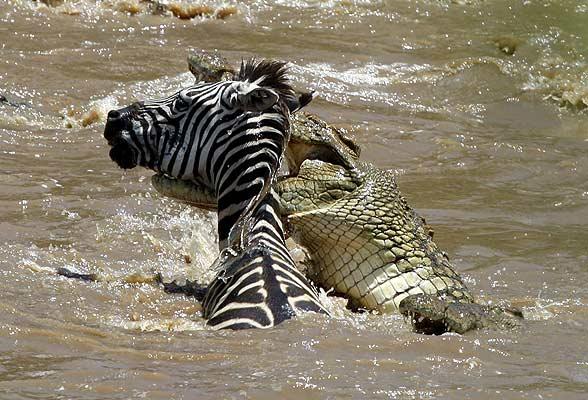 Las mejores imagenes de la naturaleza 2008