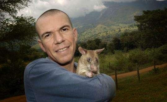 Bart Weetjens, con una de sus ratas