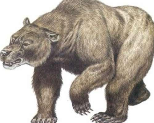 El cambio climático extinguió los osos de Europa milenios antes de ...