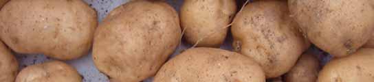 Boyle espera nutrirse de las patatas que cultive