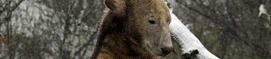 El zoo de Berlín ya no quiere al osito Knut porque le resulta muy caro