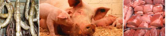 Carne de cerdo y cerdos.