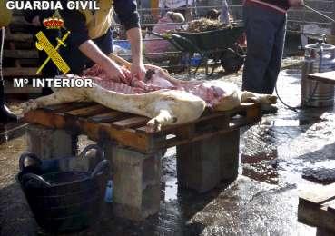 Matadero ilegal de Colmenar Viejo