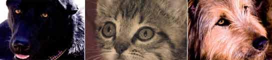 Noche, Punto y Guaje son tres de los animales que posaron como modelos en el calendario.