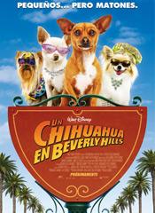 Un chihuahua en Beberly Hills - cartel