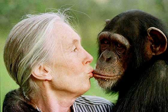 Resultado de imagen de jane chimpancés