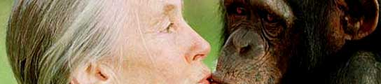 La primatóloga Jane Godall y un chimpancé