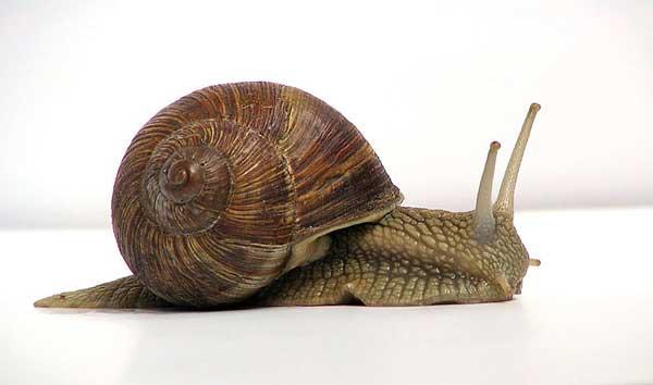 Un caracol