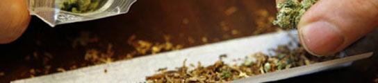 Identifican la conexi�n molecular entre el cannabis y los problemas de memoria