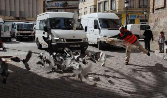 Un técnico del Ayuntamiento de Valencia cazando palomas