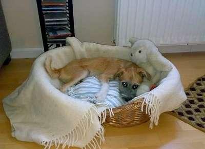 Lucky es uno de los perros que fue robado.