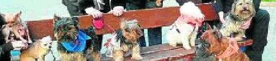 Una falla compuesta por perros, gatos, conejos y hámsters en Valencia  (Imagen: NPRESS)