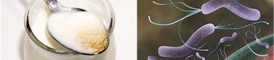 Yogur y helicobacter pylori