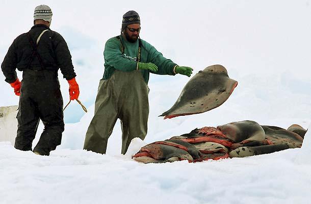 Caza de focas