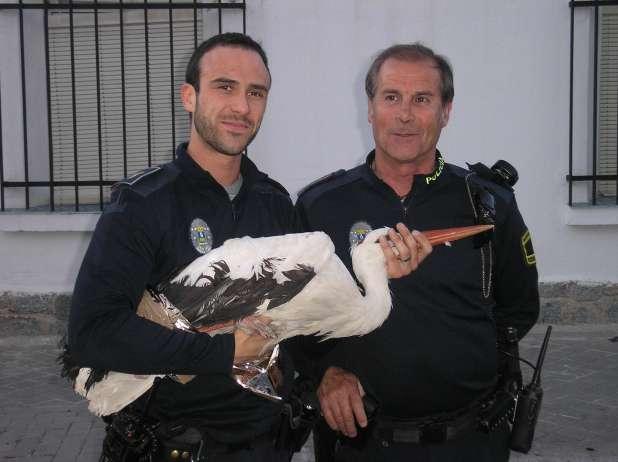 Rescatan una cigüeña