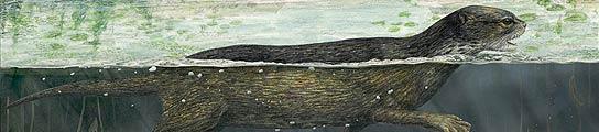 Eslabón perdido de las focas