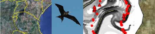 Las aves detectan 'carreteras' en el mar