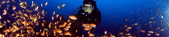 Google se zambulle en el océano para revolucionar el conocimiento científico  (Imagen: 20MINUTOS.ES)