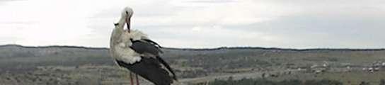 Una webcam en un nido de cigüeña