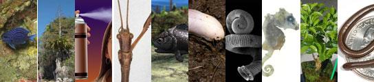 Diez nuevas especies descubiertas en 2008