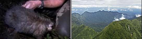 Nuevas especies en Papúa Nueva Guinea